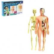 Модель человеческого тела со скелетом и внутренними органами Эврики
